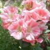Семена других цветов