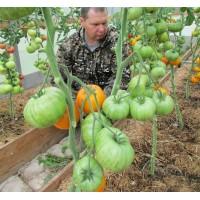 Организация условий для выращивания теплолюбивых культур в теплице