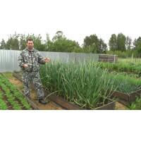 Выбираем варианты земледелия на своем участке